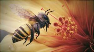 Bee - AutoDesk Maya 2012
