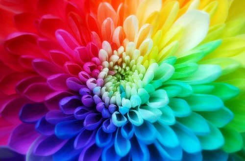 The Science of Color for Web Designing