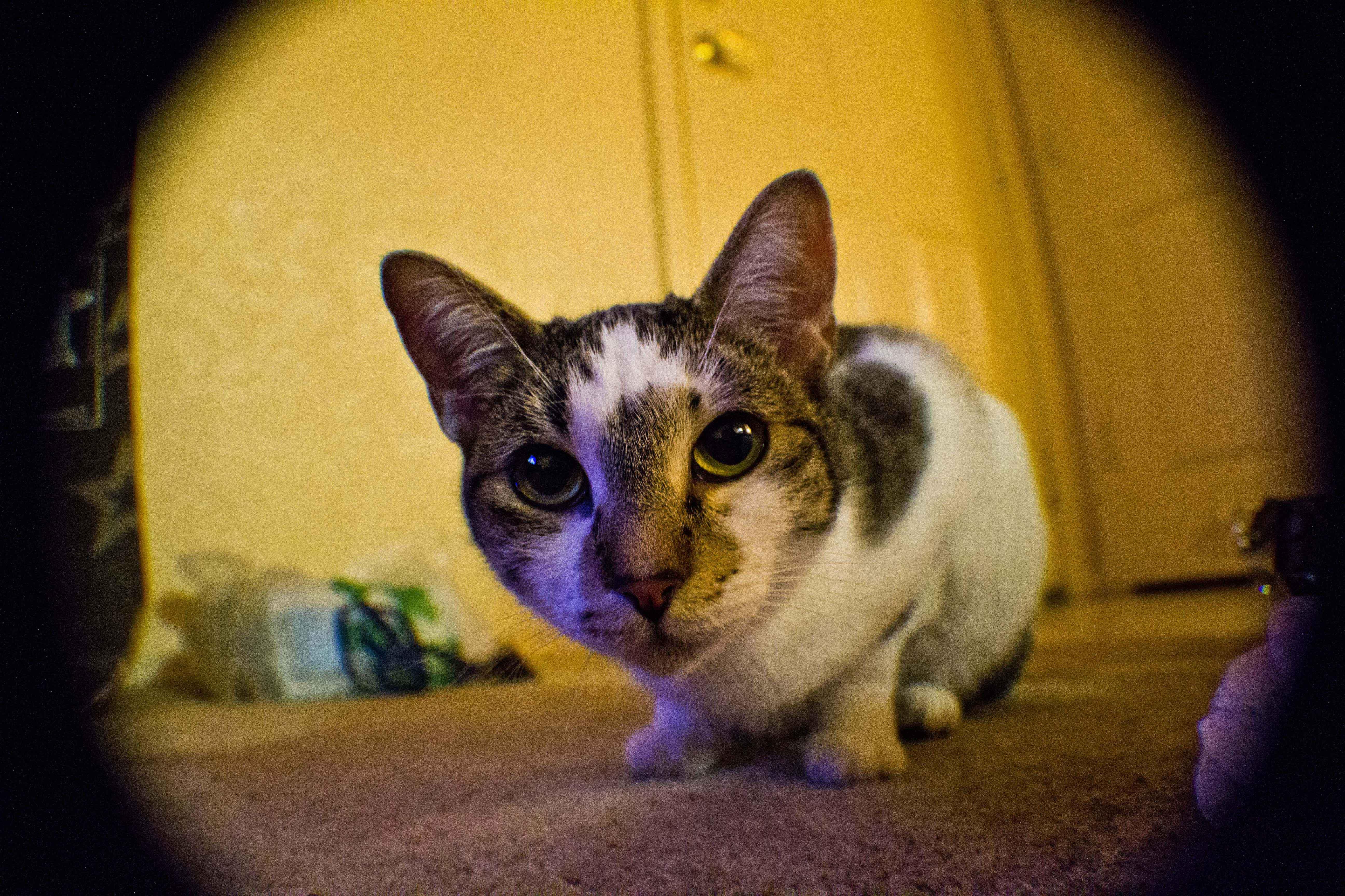 Kittycat - Jeremiah Moralez